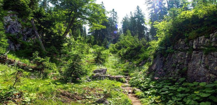 Wilderness Survival Tips
